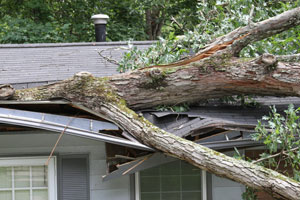 Level Creek Property Restoration provides wind damage emergency service 24-hours a day, 365 days a year